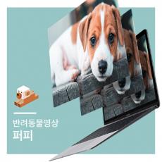 반려동물영상_퍼피